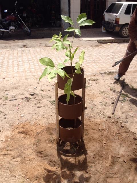 arborização 1